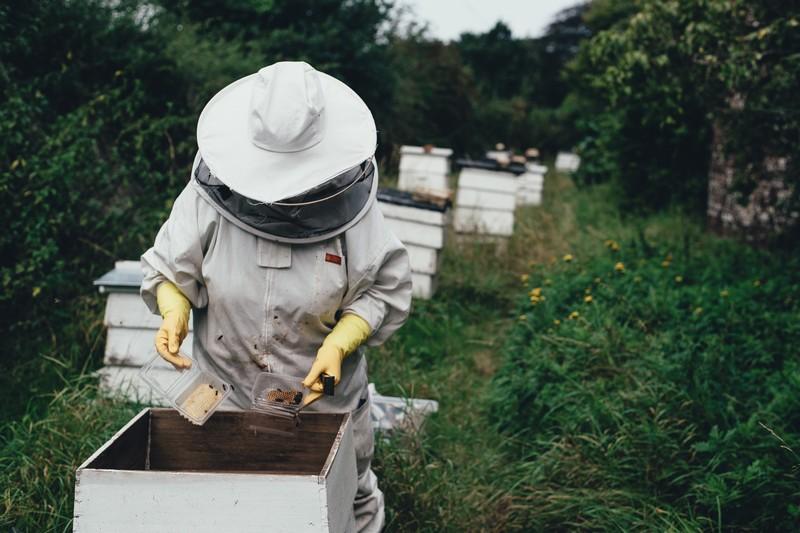 pszczelarz podczas pracy wulu